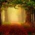 Hermoso camino lleno de arboles